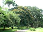 Королевский ботанический сад.