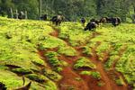Национальный парк абердер.