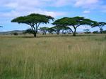 Танзания, Национальный парк серенгети.