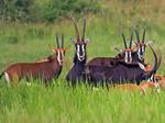 Танзания, Национальный парк руаха.