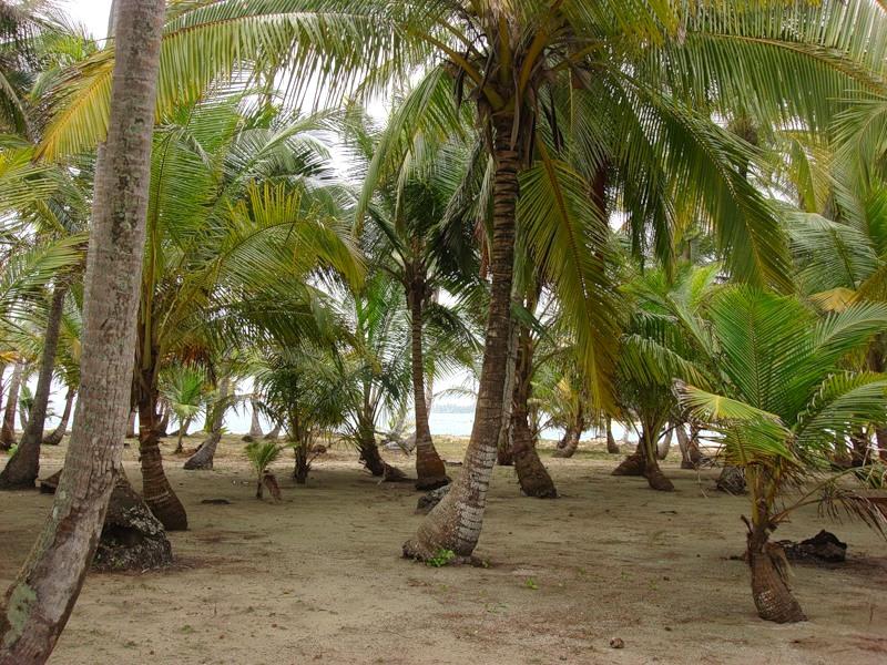 фото остров кокос