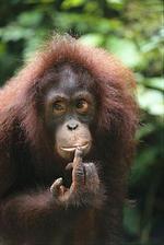 Малайзия, Борнео