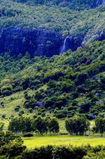 Лес махаби беломб