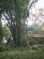 Китай, Дом ду фу