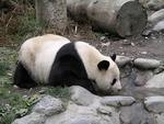 Китай, Заповедник больших панд